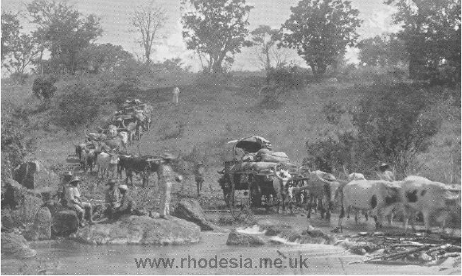 A typical scene during the days of Ox Wagon Transportation